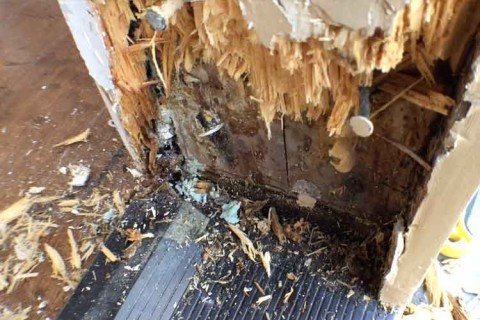 TERMITE REPAIR – OCEANSIDE