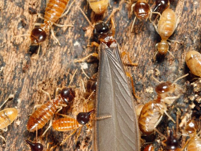 More Than You Care To Know About Termites