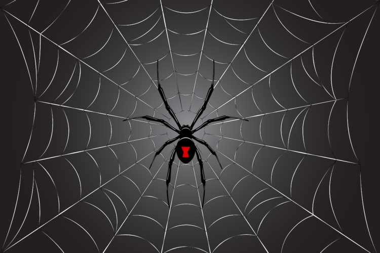 Do You Like Spiders?