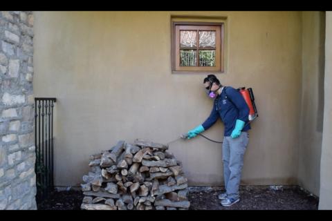Pest Control Spraying 2017