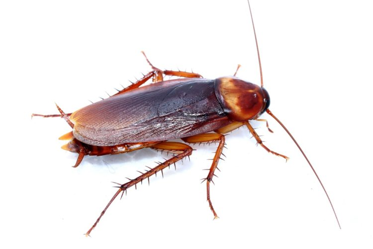 6 Facts You Should Know About Cockroaches