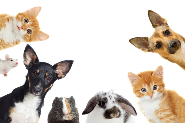How to Stop Pets from Bringing In Pests