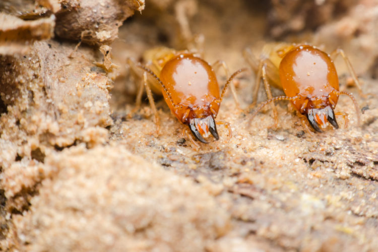 Interesting Facts About Controlling Termites