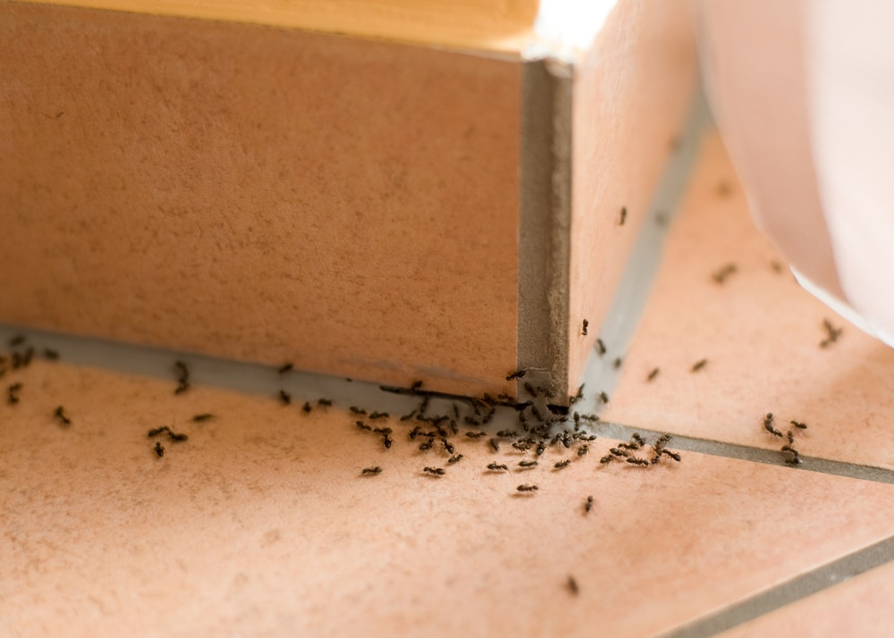 How to Stop Ants from Ruining Your Summer