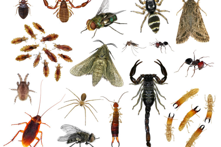 Why Pests Want Inside Your Home