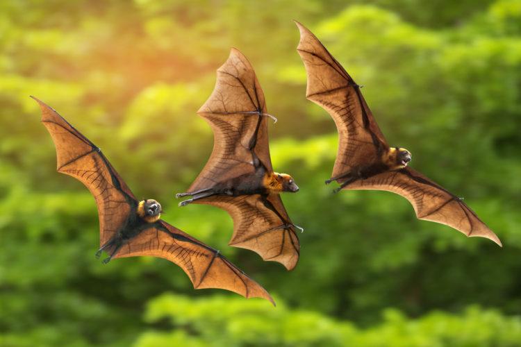 Help, I Think I Have Bats!