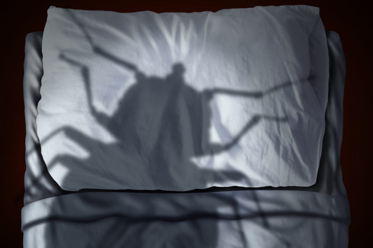 Put Your Bed Bug Fears to Rest