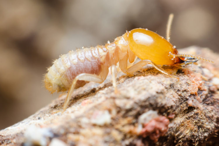 Warning Signs to Help You Spot Termites