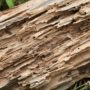 How Costly Can Termites Be?