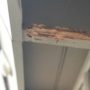 Get Your Home Back After Termite Damage
