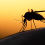 Use These Tips to Avoid Bites During Mosquito Season