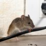 How Can I Tell If Pests Are Living in My Home?