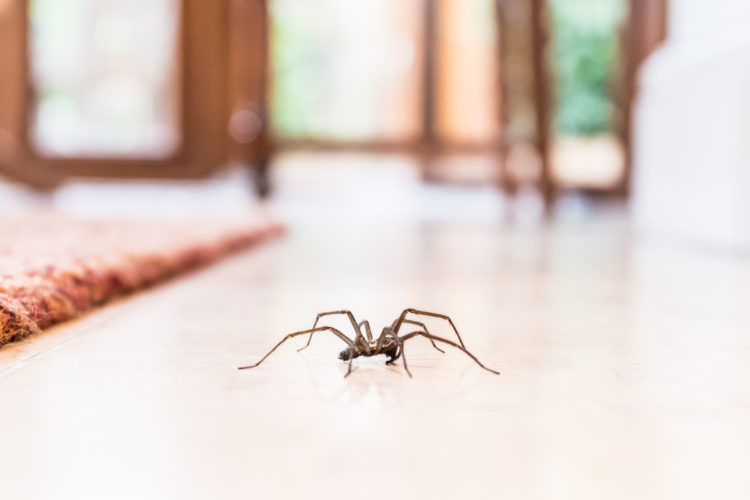 Are You Spraying for Spiders in and Around Your Home?