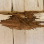 Drywood Termites Are on Their Way