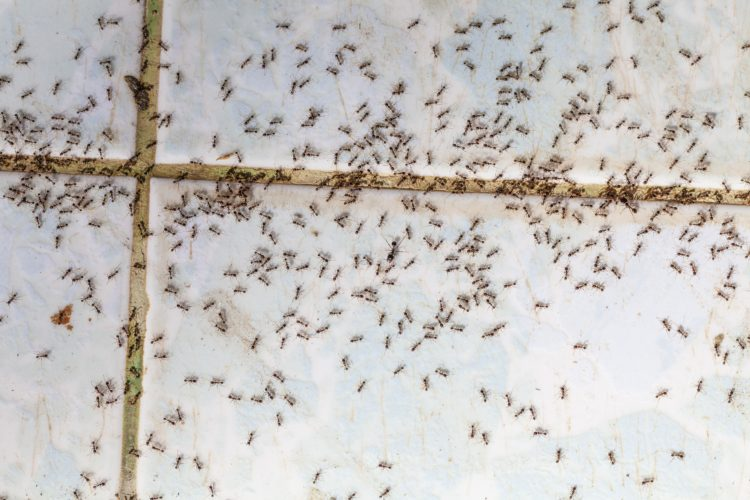 Should You Deal with a Pest Problem on Your Own?