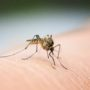 Are Mosquitoes Still Bothering You?