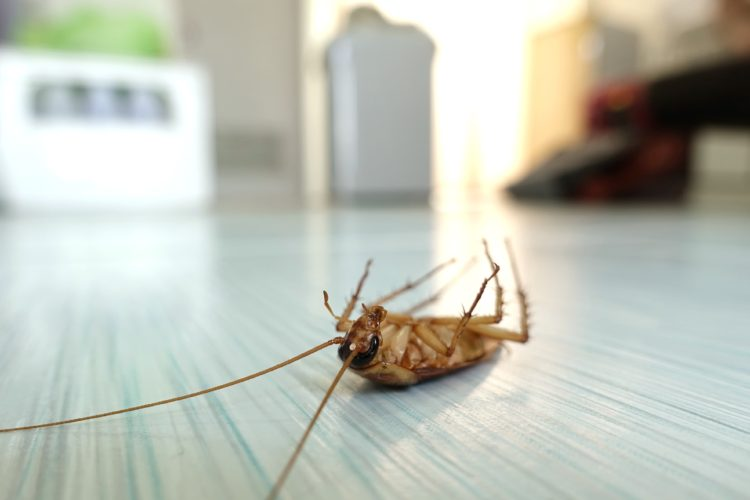 Understand Your Pest Risk Factors