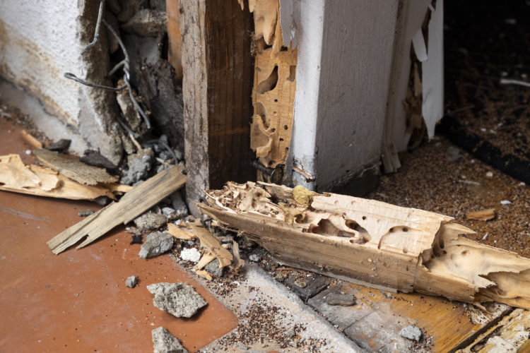 Is Your Home Safe from Termites?