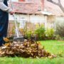 The Environment Around Your Home Encourages Pests