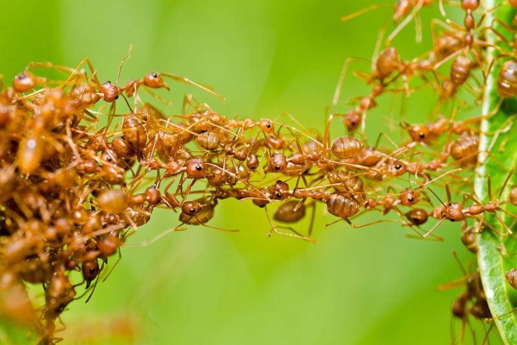 Pest Control In North San Diego County CA