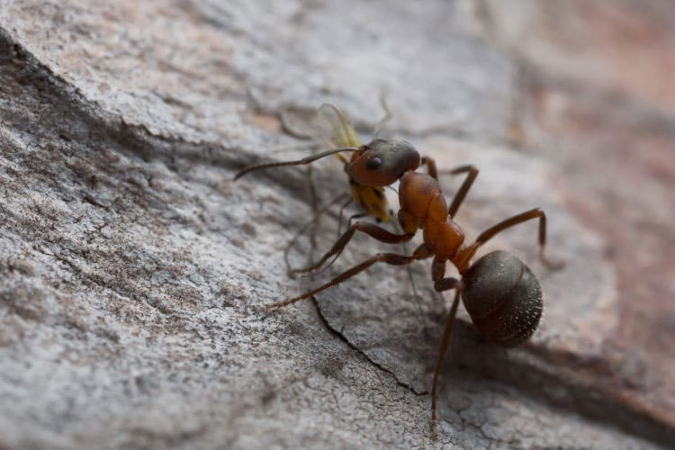 Take-These-Steps-To-Keep-Ants-Out
