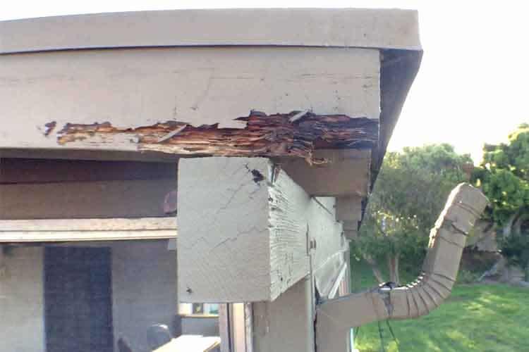 Termite Damage San Diego CA